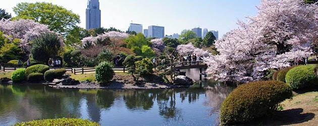 a Shinjuku-Gyoen-National-Garden-a